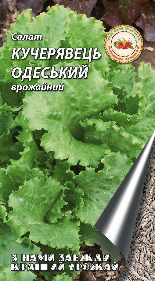 Одеський кучерявець 1, 10г