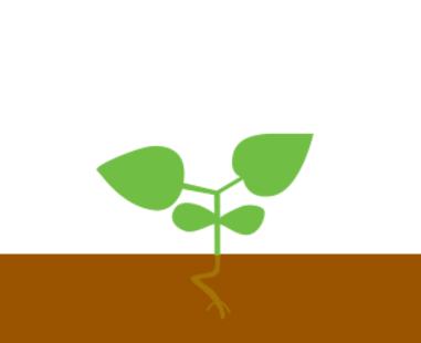 Вторая пара листьев