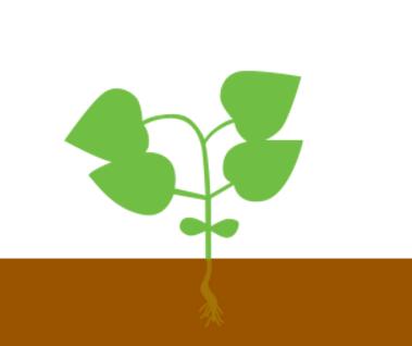4-6 пара листьев
