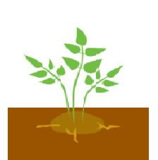 Пара листків