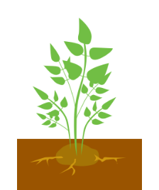Рост листьев