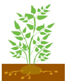Розвиток бокових пагонів