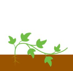 Рост листьев - бутонизация
