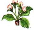 Бутонізація - цвітіння