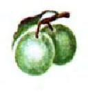Формування плодів