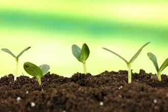 Стимуляція розвитку та росту рослин