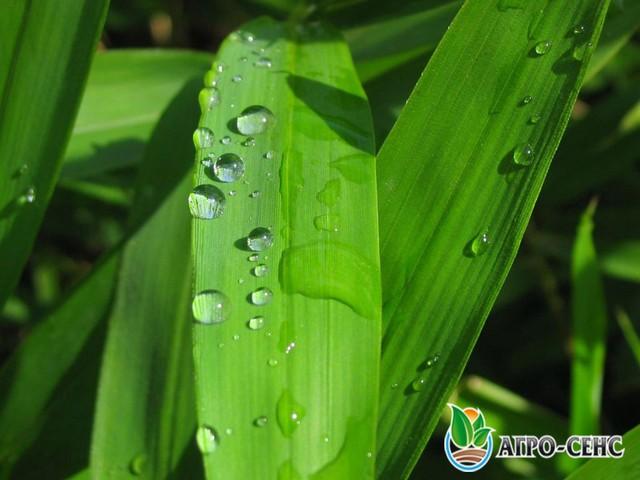 Підсилення ефективності дії пестицидів