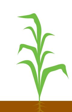 1 - 7 листків