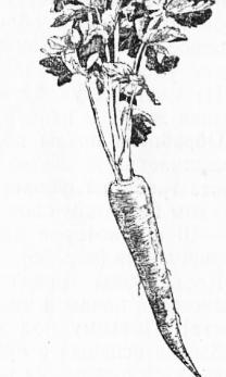 Фаза олівця