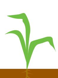 3 - 5 листків