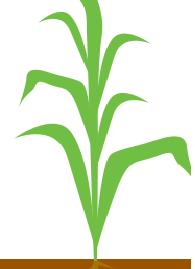5 - 7 листків