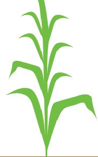 8 - 10 листків