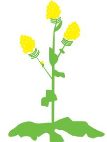 Развитие семян