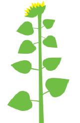 Рост стебля