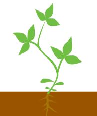 1 - 3 трійчастий листок
