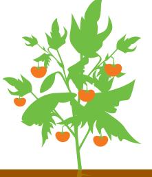 Формирование плодов