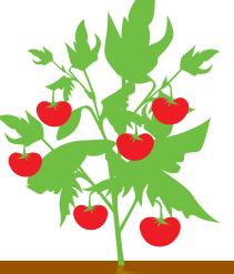 Дозревание плодов
