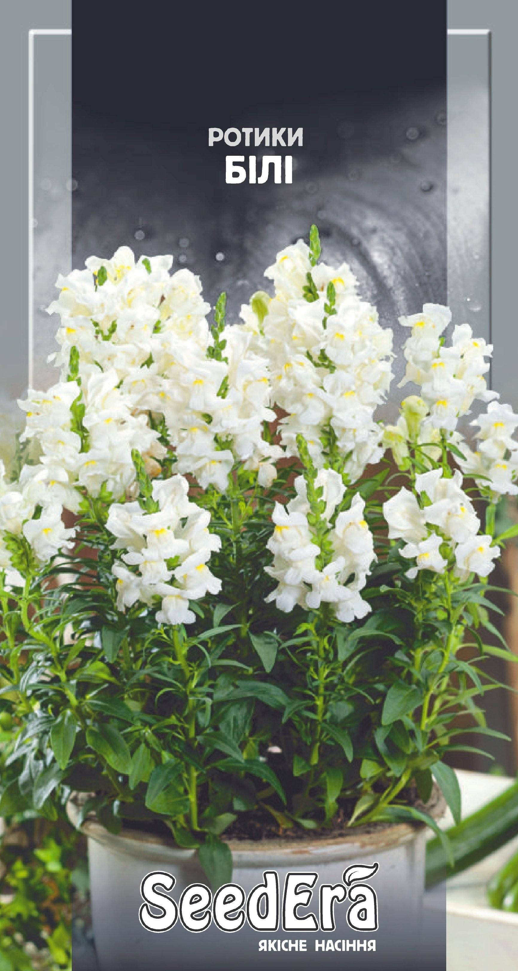 Львиные зев садовые белые