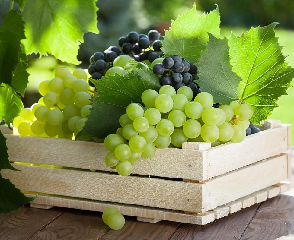 Догляд за виноградом