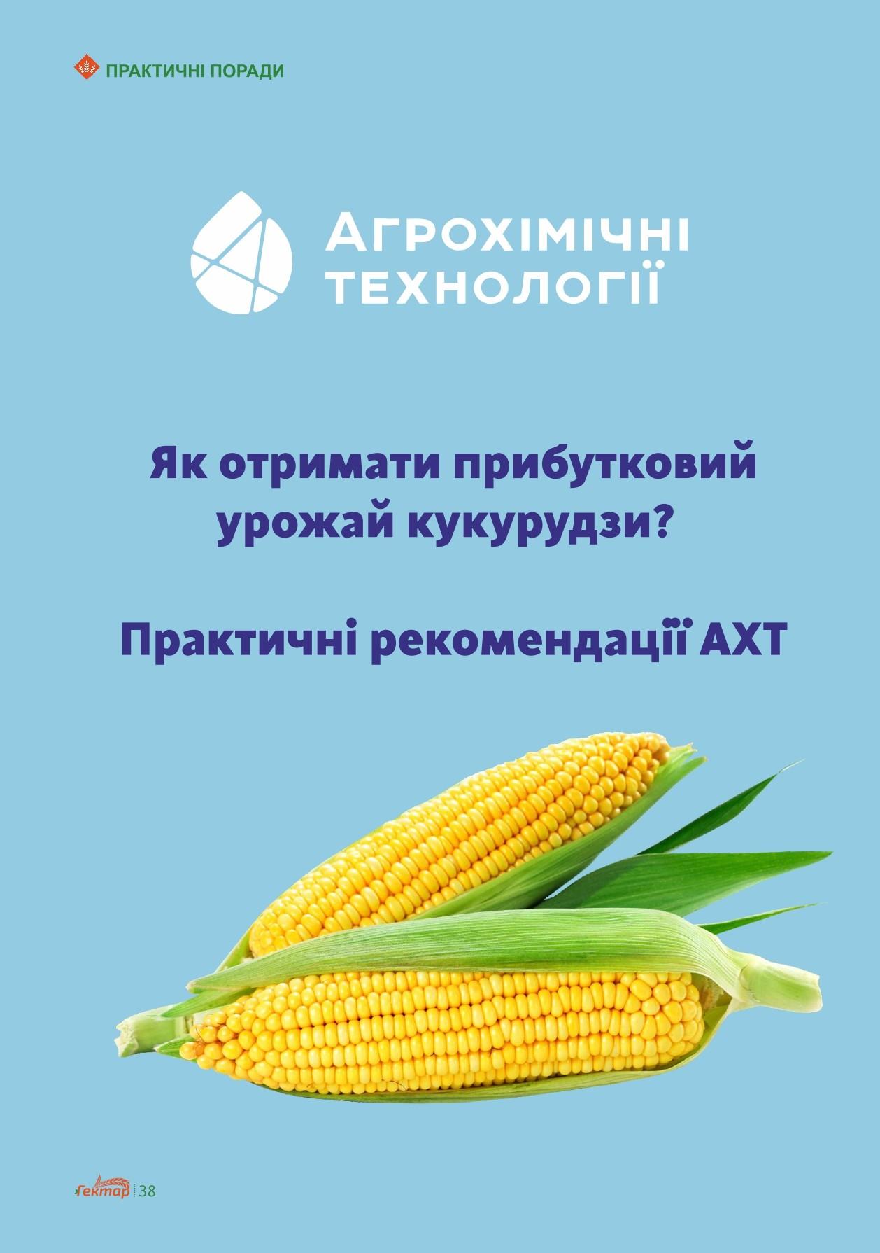 Як отримати прибутковий урожай кукурудзи?