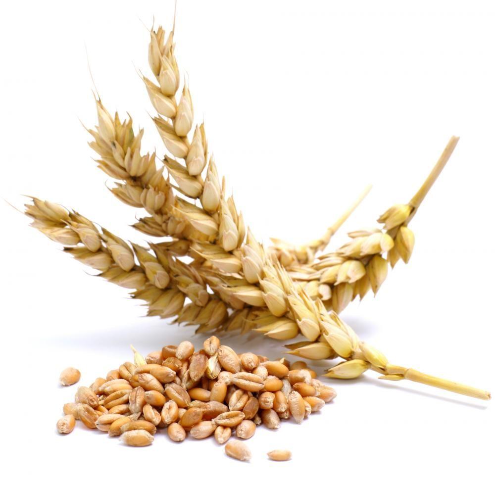 Насіння пшениці озима Чорнява