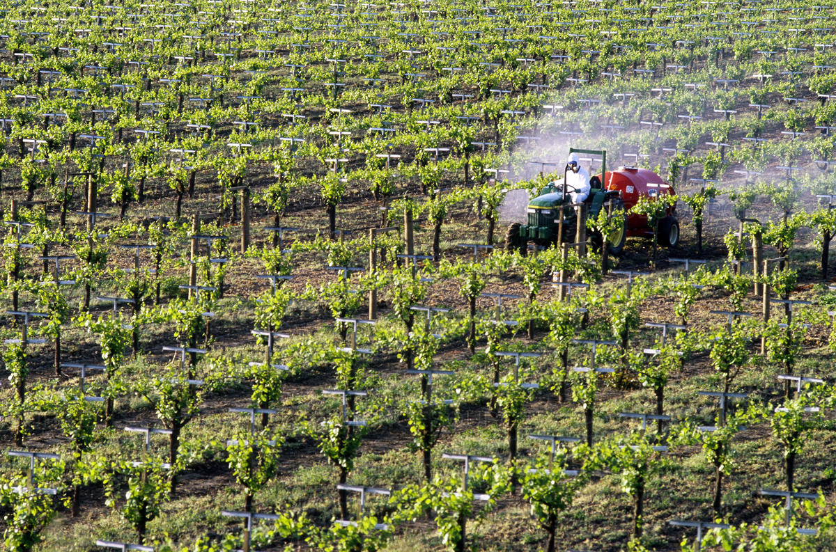Фрукти і овочі, пестициди і споживачі: нюанси, аспекти, тонкощі
