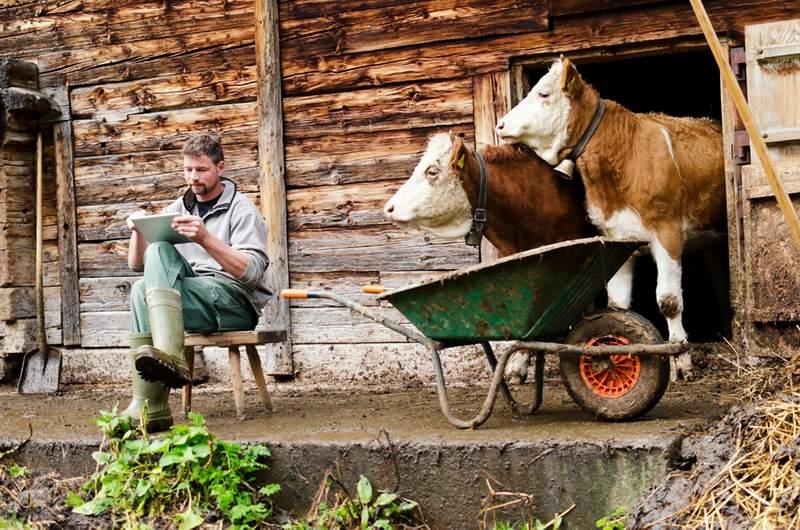 Яким бізнесом зайнятися в селі?